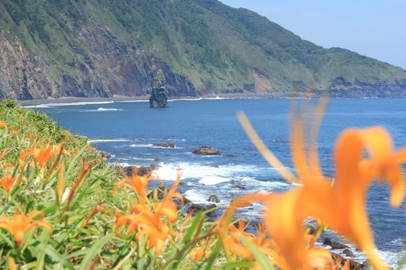 カンゾウと筆島
